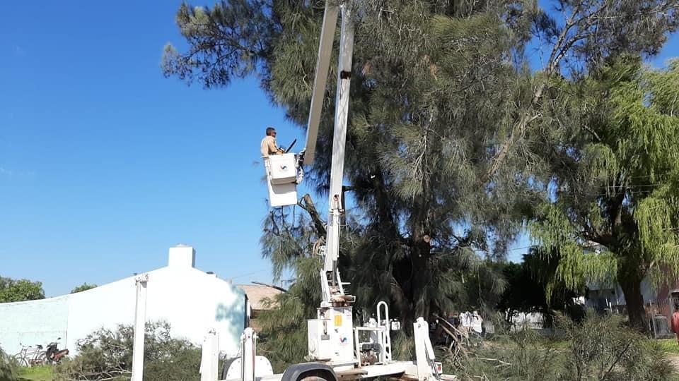 Villa Ángela: EL MUNICIPIO PODA ÁRBOLES A MODO DE PREVENCIÓN