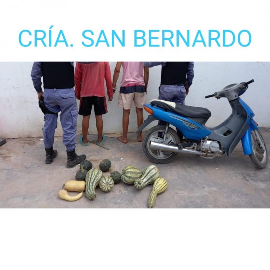 San Bernardo: DETIENEN A DOS MENORES DE EDAD QUE ROBABAN ZAPALLOS A UN PRODUCTOR DE LA LOCALIDAD