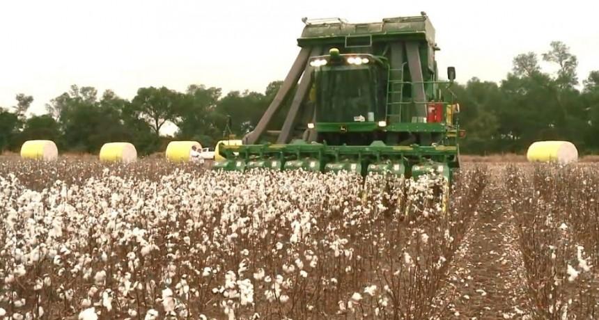 Gran incertidumbre en los productores sobre el impacto que traerá el COVID-19