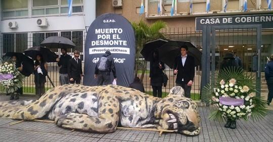 En reclamo por los Desmontes Greenpeace, vela, a un yaguareté en casa de Gobierno