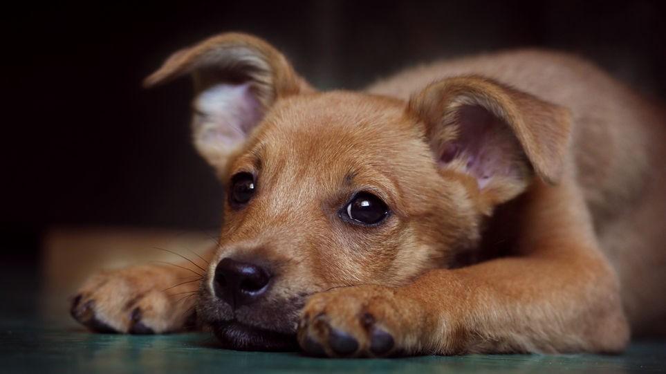 El Refugio Azul Invita a la Comunidad al Evento por el Día del Animal.
