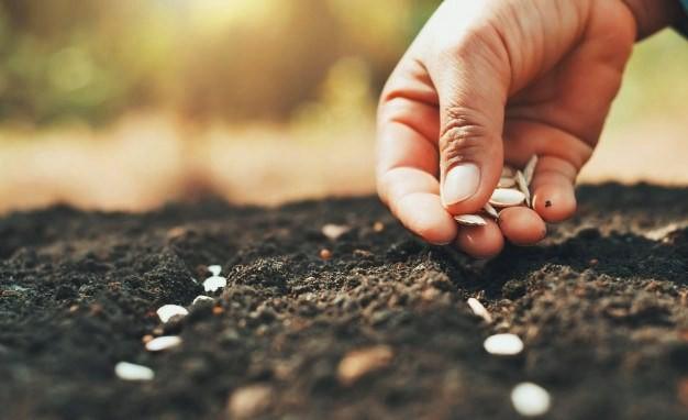 Villa Ángela: Finalizó la entrega de semillas por parte de la Secretaría de Medio Ambiente al entregar la totalidad del Stock.