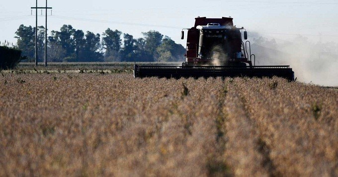 INFORME DEL INTA-Por problemas de eficiencia en la trilla, las pérdidas en soja alcanzan los US$ 1.300 millones