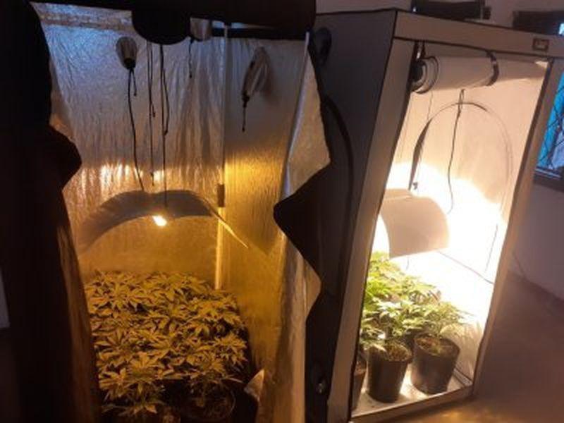Buscaban una moto y terminaron desarmando un invernadero de marihuana