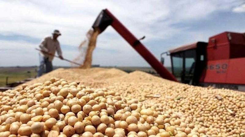 AGRO: La soja superó los 600 dólares y alcanzó su valor más alto en nueve años