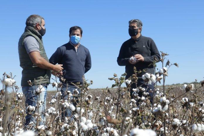 Dos plantas industriales y un campo de algodón visitó el gobernador en el Sudoeste chaqueño