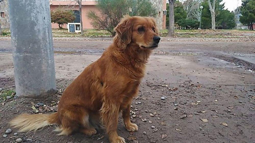 Una perra espera en la comisaría a su dueño preso hace un año