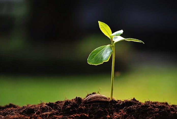 Día Mundial del Ambiente: la Provincia apuesta a la reforestación plantando 2.500 árboles nativos