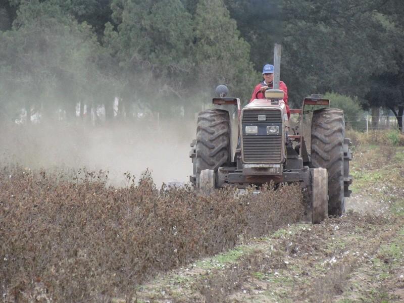 EL 15 DE JUNIO FUE LA FECHA LÍMITE - Controles a la destrucción de rastrojos del algodón en el Chaco