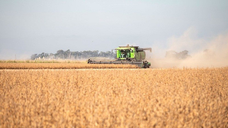 El precio internacional de la soja cayó más de un 8%