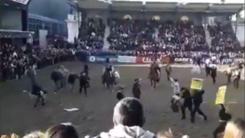 Veganos irrumpieron en la pista de La Rural y los gauchos los corrieron con caballos y a rebencazos