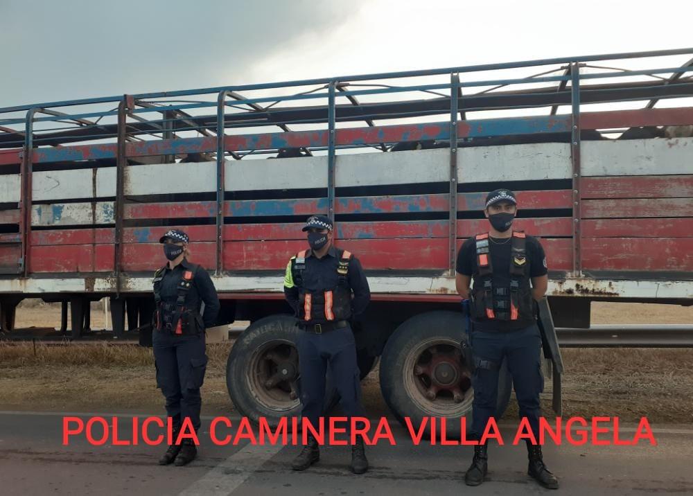Villa Ángela: LA DIVISIÓN DE TRANSITO URBANO SECUESTRÓ UN TRAILER CON 58 ANIMALES POR FALTA DE DOCUMENTACIÓN.