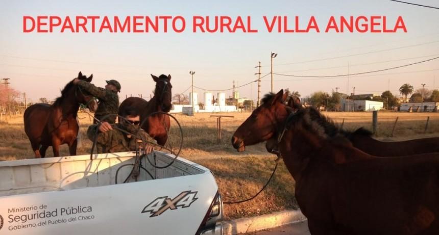 Villa Ángela: PERSONAL DE SEGURIDAD RURAL SECUESTRO CUATRO EQUINOS SUELTOS EN LA VÍA PÚBLICA