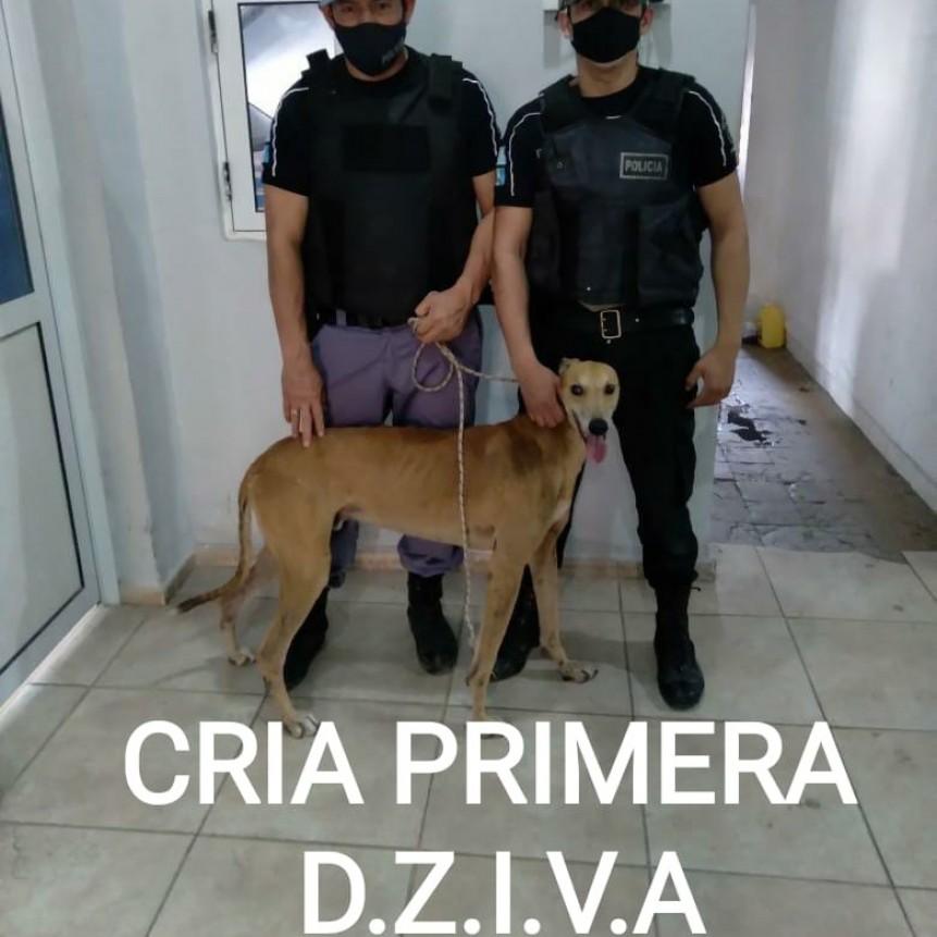 Villa Ángela: EL PERSONAL POLICIAL RECUPERA OTRO PERRO Y YA FUE RESTITUÍDO A SU DUEÑA